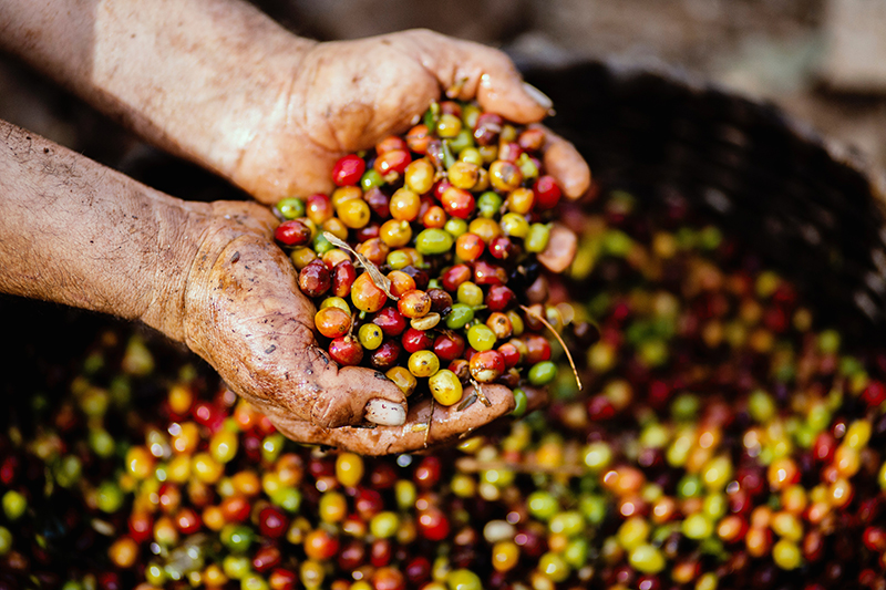 Coffee Facts about the property of coffee