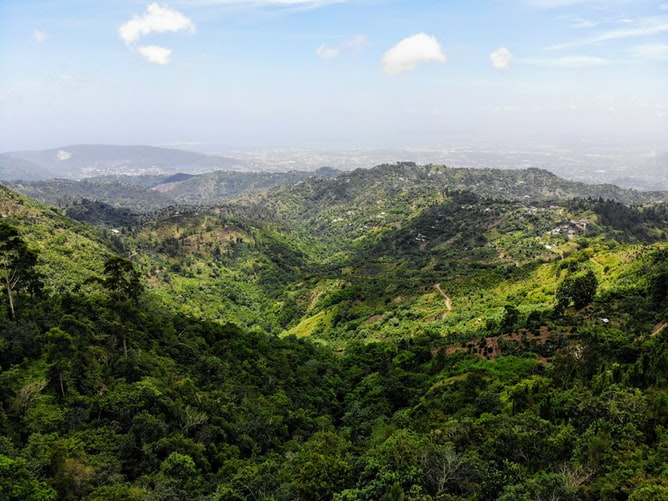 A landscape view of where coffee is grown